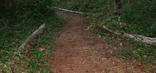 Hiking Near Shelton WA